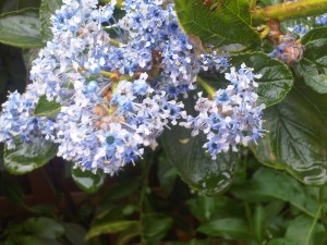 IMG00532 20120509 1841 300x225 A few snapshots of my garden.